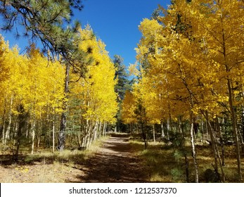 Fall colors in Lockett Meadow Flagstaff Arizona