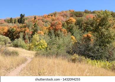 Fall colors of maple trees cover the hillside in the foothills of the Wasatch Range near Salt Lake City, Utah.