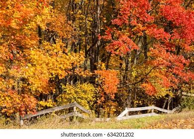 Fall Colors of Michigan Near Traverse City