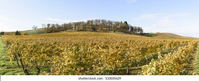 Fall Colors of Mid Willamette Valley Vineyards in Western Oregon