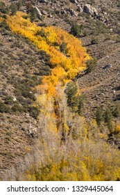 Fall colors in the mountains of the Eastern Sierras beautiful yellow and gold colors.