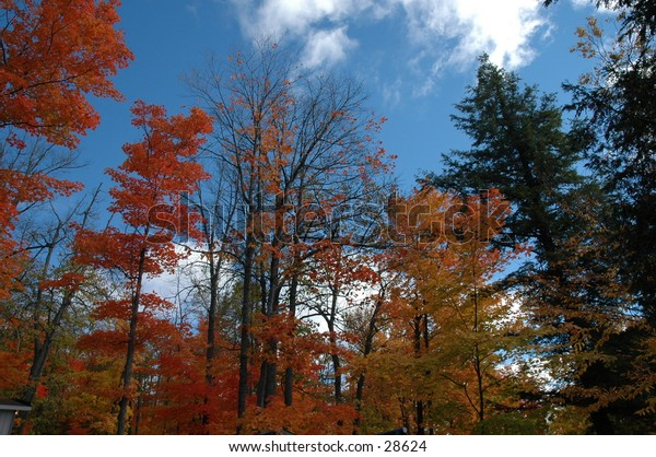 Fall colors and the nice blue sky, and clouds.