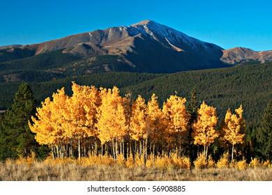 Fall colors on Aspens below Mt. Silverheels near Breckenridge, Colorado