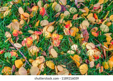 Fall colors on the ground