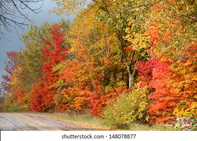 Fall Colors on a Road Near Traverse City
