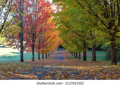 Fall colors on tree lined street