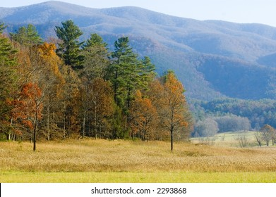 The fall colors in a patch of woods stand out against the blue haze of the Smoky mountains.