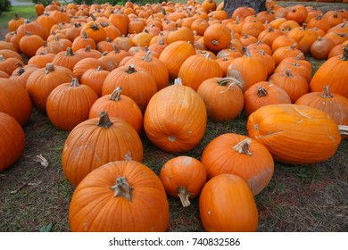Fall colors, pumpkins for Thanksgiving and holiday season background
