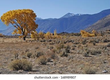Fall colors and Ranch-land, Nevada
