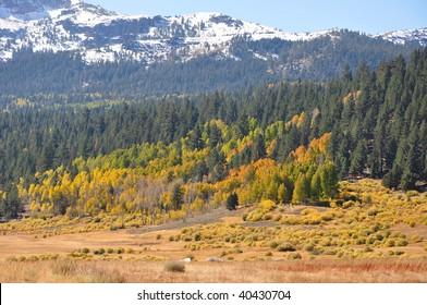 Fall colors in Sierra