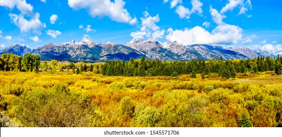 Fall Colors surrounding the Cloud covered Peaks of the Grand Tetons In Grand Tetons National Park viewed from Black Ponds Overlook near Jackson Hole, Wyoming, United States