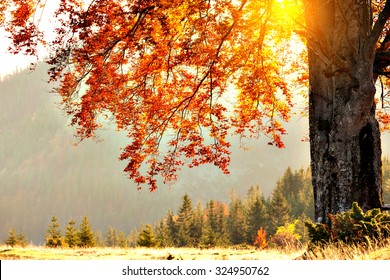 fall colors tree at sunny day