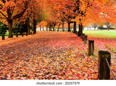 Fall colors of  Trout Lake Park, Vancouver, Canada