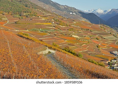 Fall colors in the Vineyards in the Alps