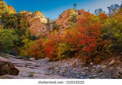 Fall colors in Zion National Park near Springdale Utah, USA Landscape in the autumn season. Changing leaves of fall in Southern Utah.