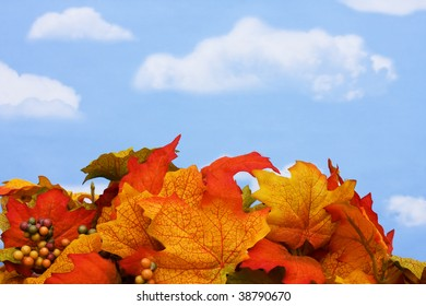 Fall coloured leaves and berries on a sky background, Fall Harvest