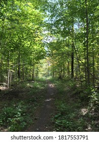 Fall colours along the Simcoe County mountain bike club Trail near Orillia Ontario Canada