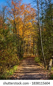 Fall Colours in Ontario Maple Nature Reserve Trail Canada
