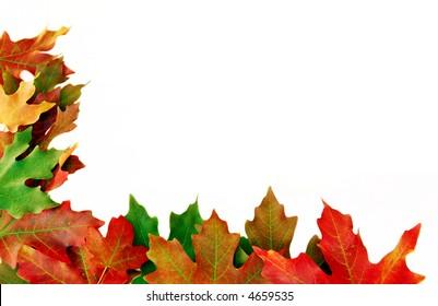 Fall Corner