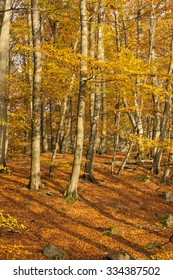 Fall in the deepest beech and oak woods of Skane, the National park of Soderasen, in South Sweden.