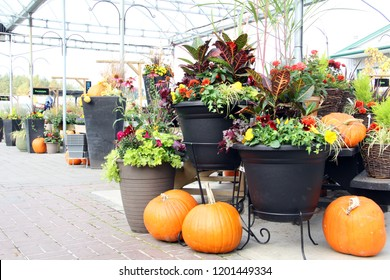 Fall display of pumpkins and flower arrangements at a garden greenhouse.
