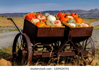 Fall display of variety of different colored pumpkins arranged in straw sitting in old farm equipment along rural mountain ranch road