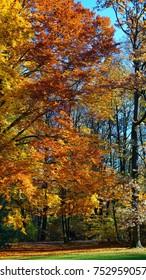 Fall in English Garden, Munich