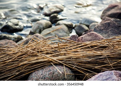 Fall in Finland with water and dead reeds.