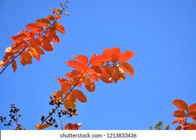 Fall foliage against a bright blue sky.