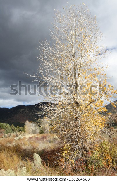 Fall foliage against grey sky in the Sangre de Cristo Mountains, New Mexico.