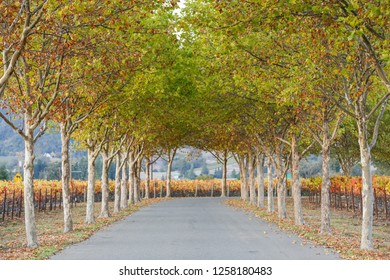 Fall Foliage, Autumn Landscape in Wine Country, Northern California