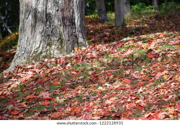 Fall Foliage Boston Massachusetts Nature Parks Outdoor Stock Image