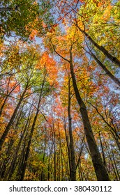 Fall foliage in hardwood forest