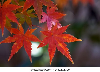 fall foliage from Japanese garden
