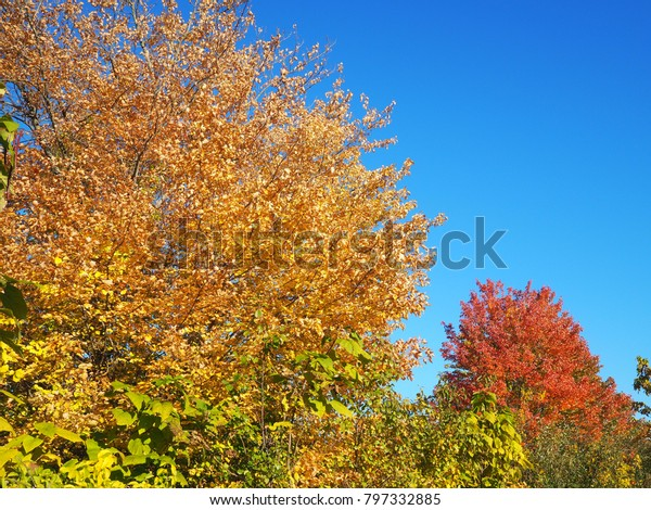 Fall Foliage Massachusetts Nature Stock Image