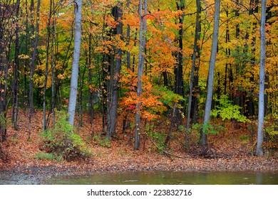 Fall foliage in Michigan state park