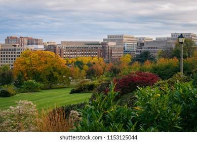 Fall foliage and modern buildings in Alexandria, Virginia