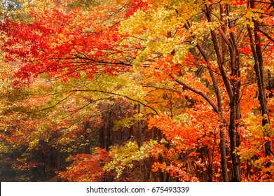Fall foliage on the Blue Ridge Parkway in North Carolina.