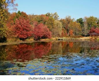 Fall Foliage On Walney Pond, Fairfax County, Virginia