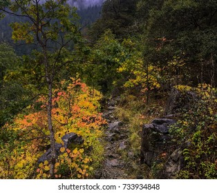 Fall Foliage In Oregon along rocky trail in forest.