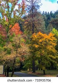 Fall Foliage In Oregon Park.