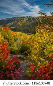fall foliage in scenic landscape