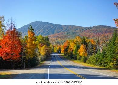 Fall Foliage Trees Road