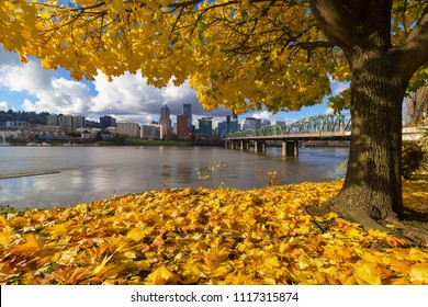 Fall Foliage under the Maple tree with Portland Oregon city skyline by Hawthorne Bridge along Willamette River
