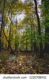 fall in the forest