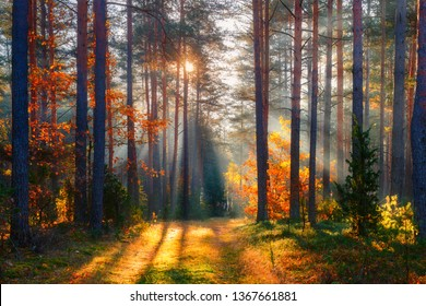 Fall. Fall forest. Forest landscape. Autumn nature. Sunshine in forest. Sun shines through trees. Path in natural park with autumn trees. - Shutterstock ID 1367661881