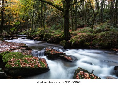 fall in forest with river in motion blur