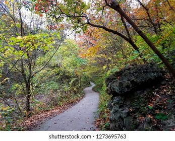 Fall forest spring trail