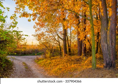 Fall forest in sunset light. Beautiful nature background. Forest lane in autumn colors