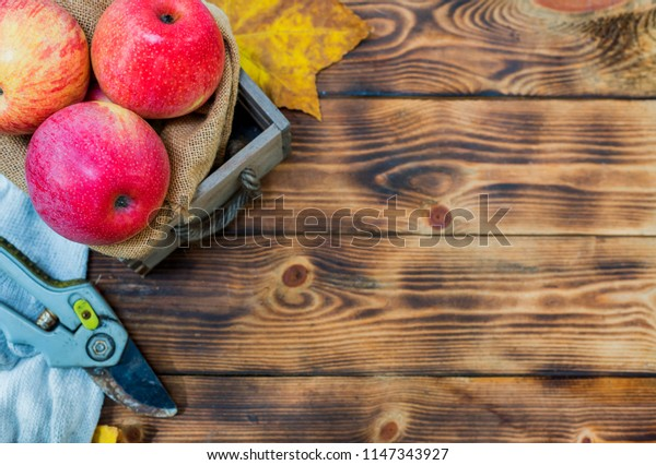 Fall harvest cornucopia. Basket with red apples in the garden. Copy space on wood background in Autumn season.